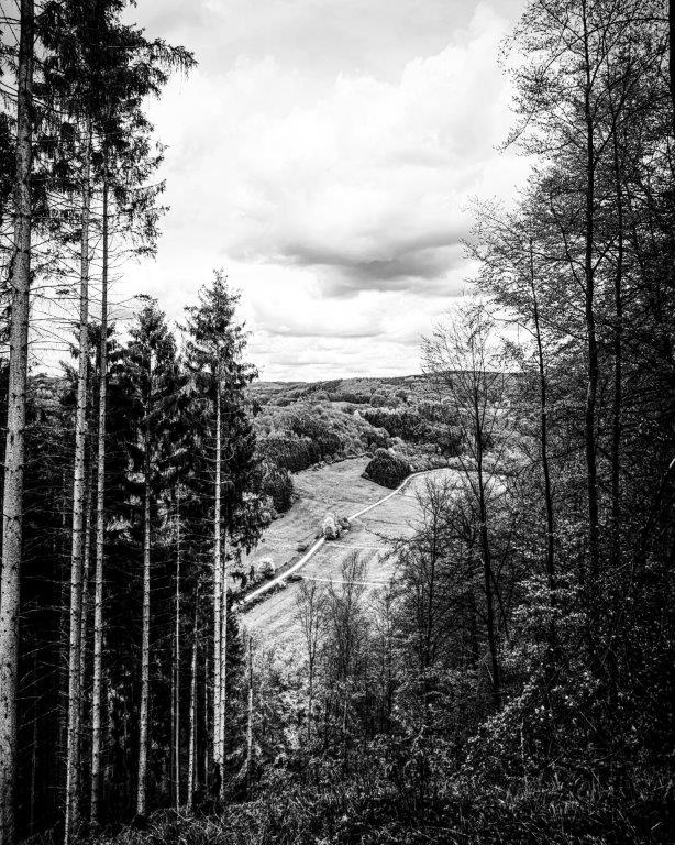 zwart en witte woud