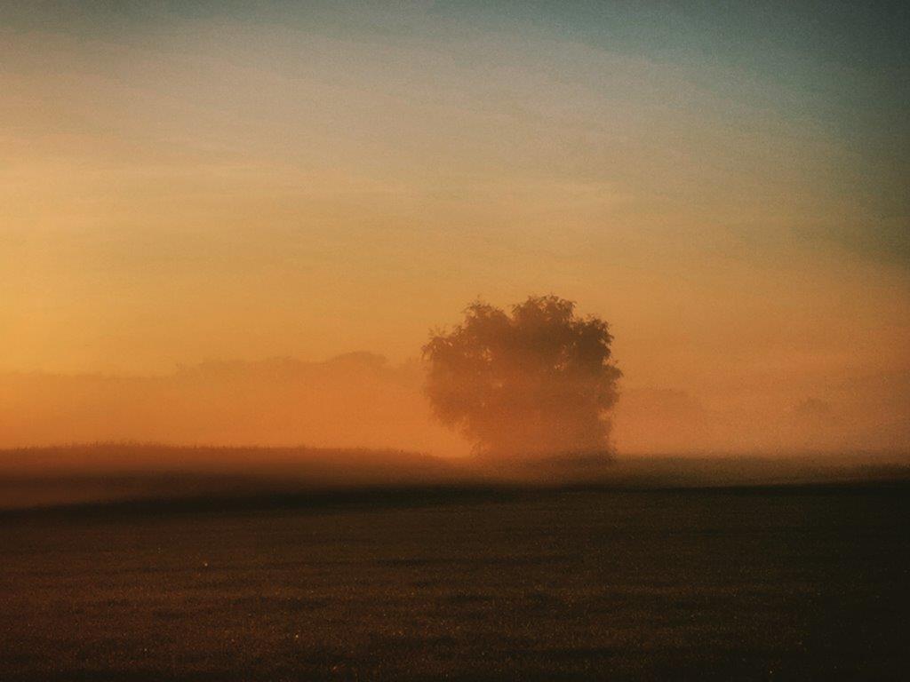 misty mornings @ maashorst