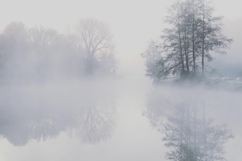 dommel in de mist zw