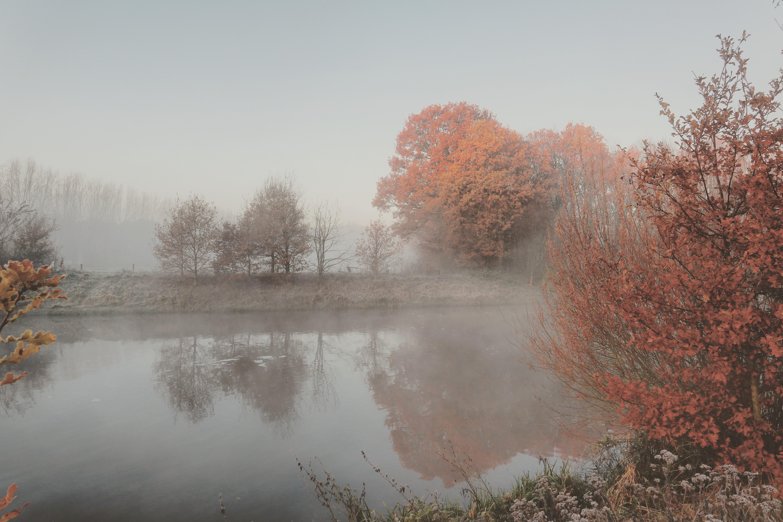 herfstige mist