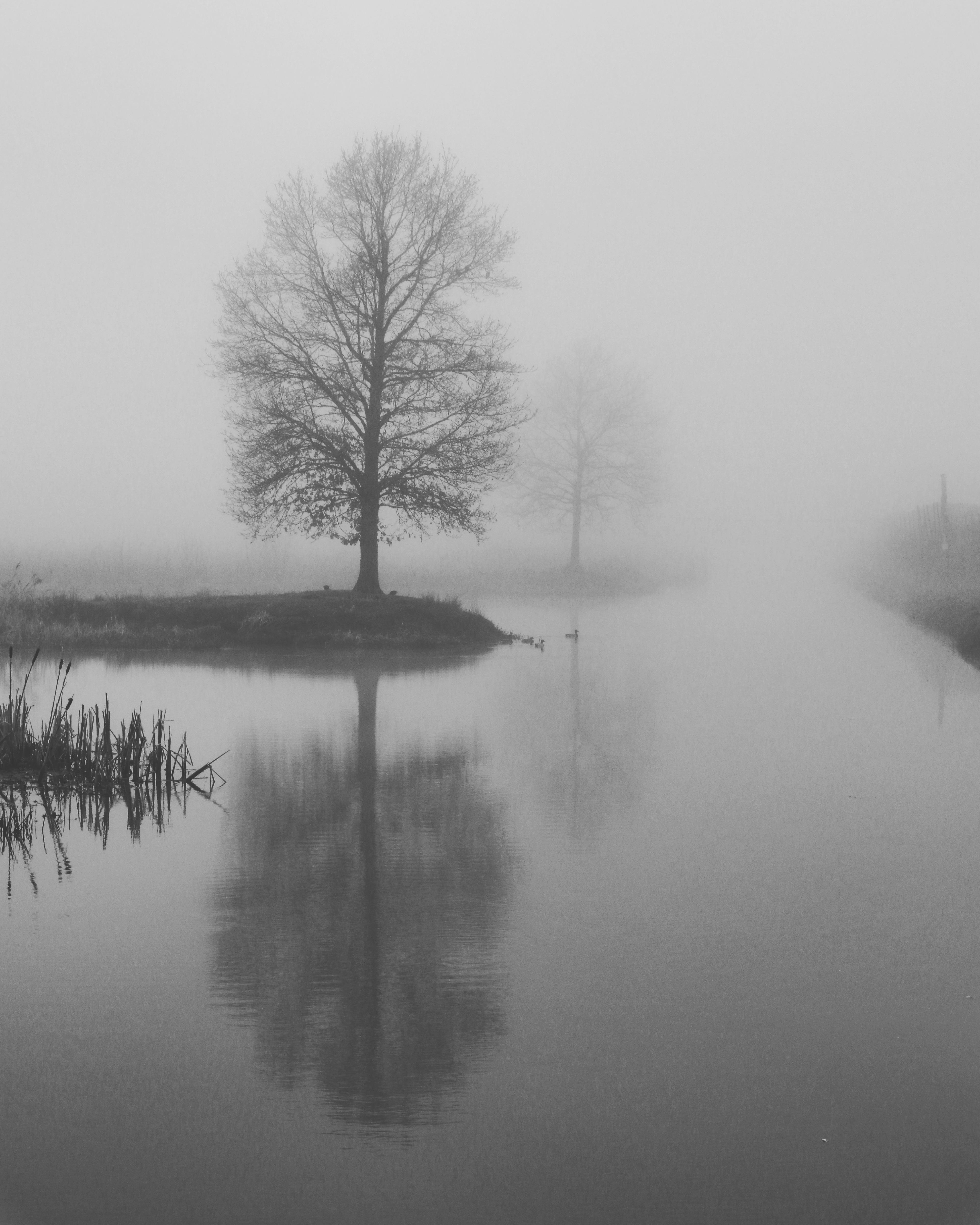 misty reflections bnw